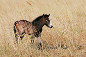 HOR 02 KH0047 01