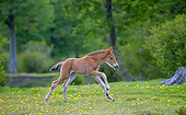 HOR 02 KH0050 01