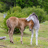 HOR 02 KH0060 01