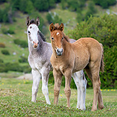HOR 02 KH0061 01