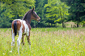 HOR 02 KH0062 01