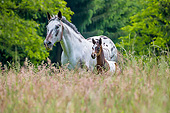 HOR 02 KH0063 01