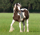 HOR 02 MB0034 01