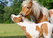 HOR 02 MB0035 01