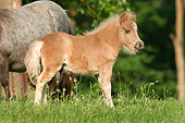 HOR 02 MB0037 01