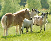 HOR 02 MB0040 01