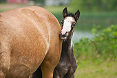 HOR 02 MB0042 01