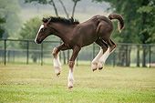 HOR 02 MB0046 01