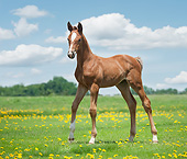 HOR 02 MB0055 01