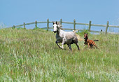 HOR 02 RK0096 59