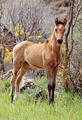 HOR 02 SS0002 01