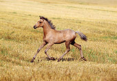 HOR 02 SS0003 01