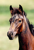 HOR 02 SS0009 01
