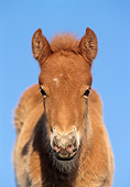 HOR 02 SS0011 01