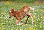 HOR 02 SS0016 01