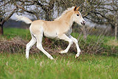 HOR 02 SS0134 01