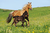 HOR 02 SS0136 01