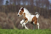 HOR 02 SS0139 01