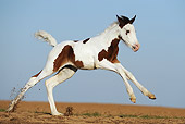 HOR 02 SS0141 01