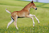 HOR 02 SS0142 01