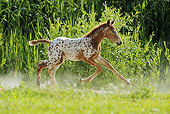 HOR 02 SS0143 01