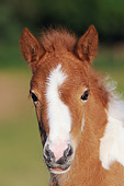HOR 02 SS0151 01