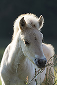 HOR 02 SS0153 01