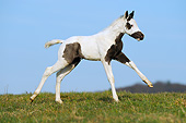 HOR 02 SS0154 01