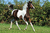 HOR 02 SS0155 01
