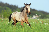 HOR 02 SS0161 01