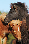 HOR 02 SS0166 01