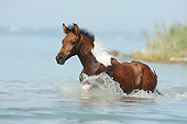 HOR 02 SS0170 01