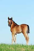HOR 02 SS0172 01