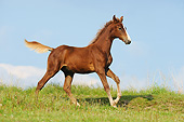 HOR 02 SS0174 01