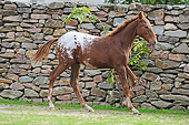 HOR 02 SS0175 01