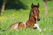 HOR 02 SS0176 01