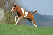HOR 02 SS0178 01