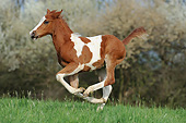 HOR 02 SS0179 01