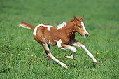 HOR 02 SS0181 01
