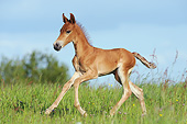HOR 02 SS0182 01