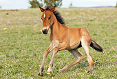 HOR 02 TL0006 01