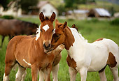 HOR 02 DB0001 01