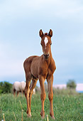 HOR 02 DB0003 01