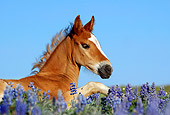 HOR 02 KH0004 01