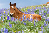 HOR 02 KH0005 01