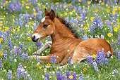HOR 02 KH0006 01