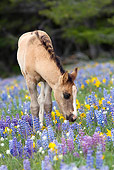 HOR 02 KH0007 01