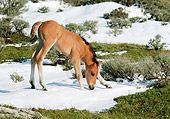 HOR 02 KH0009 01