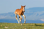 HOR 02 KH0011 01