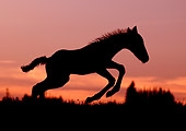 HOR 02 KH0012 01